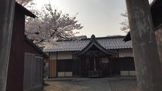 日本一周女ひとり旅260日目。福井県小浜公園と町並みで桜Live