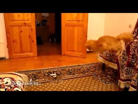 Кот повторяет за марио )))