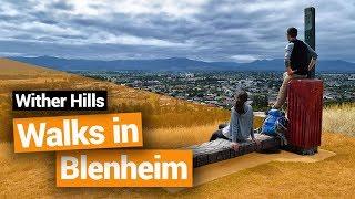 Video blog - Wither Hills Farm Park Walks in Blenheim - Day 243