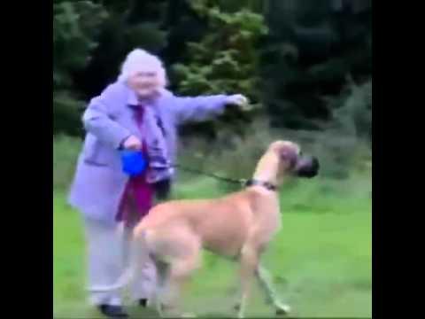 Hundetour