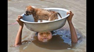 DATE UNA MEDAGLIA A QUESTE PERSONE - INCREDIBILI SALVATAGGI DI ANIMALI