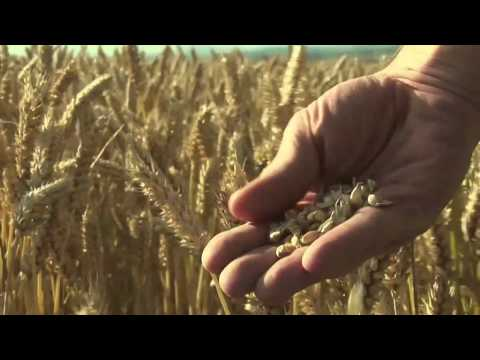 watch food matters full documentary online free