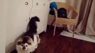 Коты тоже смотрят телевизор!