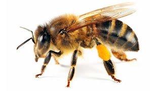 Dạy bé học các con vật quen thuộc - em học hình ảnh các loại côn trùng - dạy bé thông minh sớm
