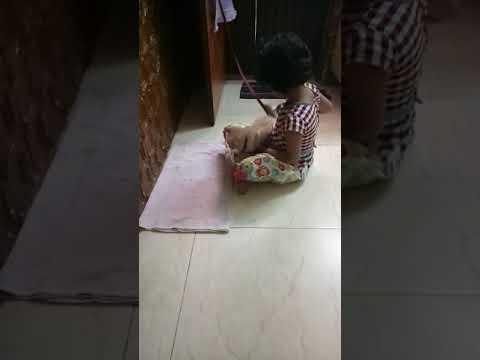 Baby combing cat hair