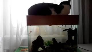 Лиля - королева аквариума