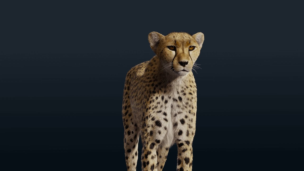 Cheetah   Run  3D Model(Animated, Fur)| Blender 3D | VFX  Grace