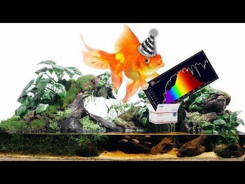 2020 Aquarium Hobby Trends You NEED To Know [Live Stream]