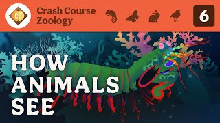 How Animals See: Crash Course Zoology #6