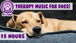 How to Relax my Dog in my House! New Calming Music Has Helped Over 4 Million Pets  Pet Therapy