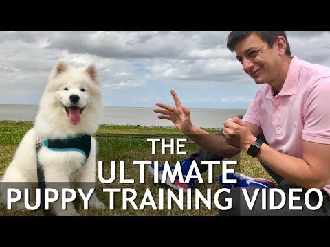 the-ultimate-puppy-training-video!-stop-chewing,-biting,-jumping,-leash-training,-roll-over