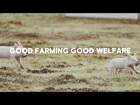RSPCA Approved Good Food Series: Good farming good welfare