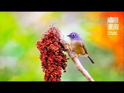 """孫清松、吳金黛- 晨光中的歌《鳥2 天籟所在的地方》/ Sun Ching-sung, Judy Wu - Singing in the Dawn Light """"Birds II"""""""
