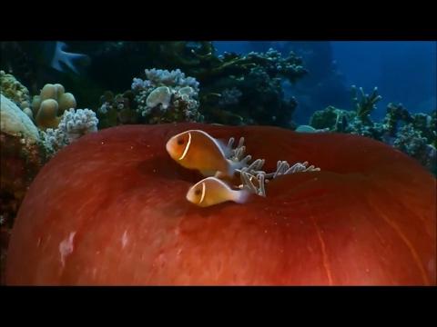 Canção do Mar - Dulce Pontes (cover) Song of the sea mp3