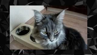 Противоугонный тест мисок для кошек