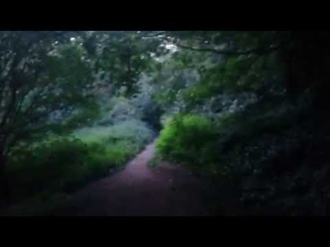 Gledhow Valley Woods: Virtual Tour #1 (Part 2 of 2)