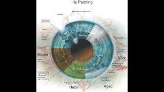 Göz Anatomisi (2)(Bulbus Oculi)