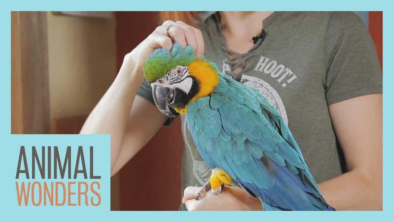 Download Bird Molting