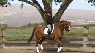 Red Adair 2014 Dressage horse for sale
