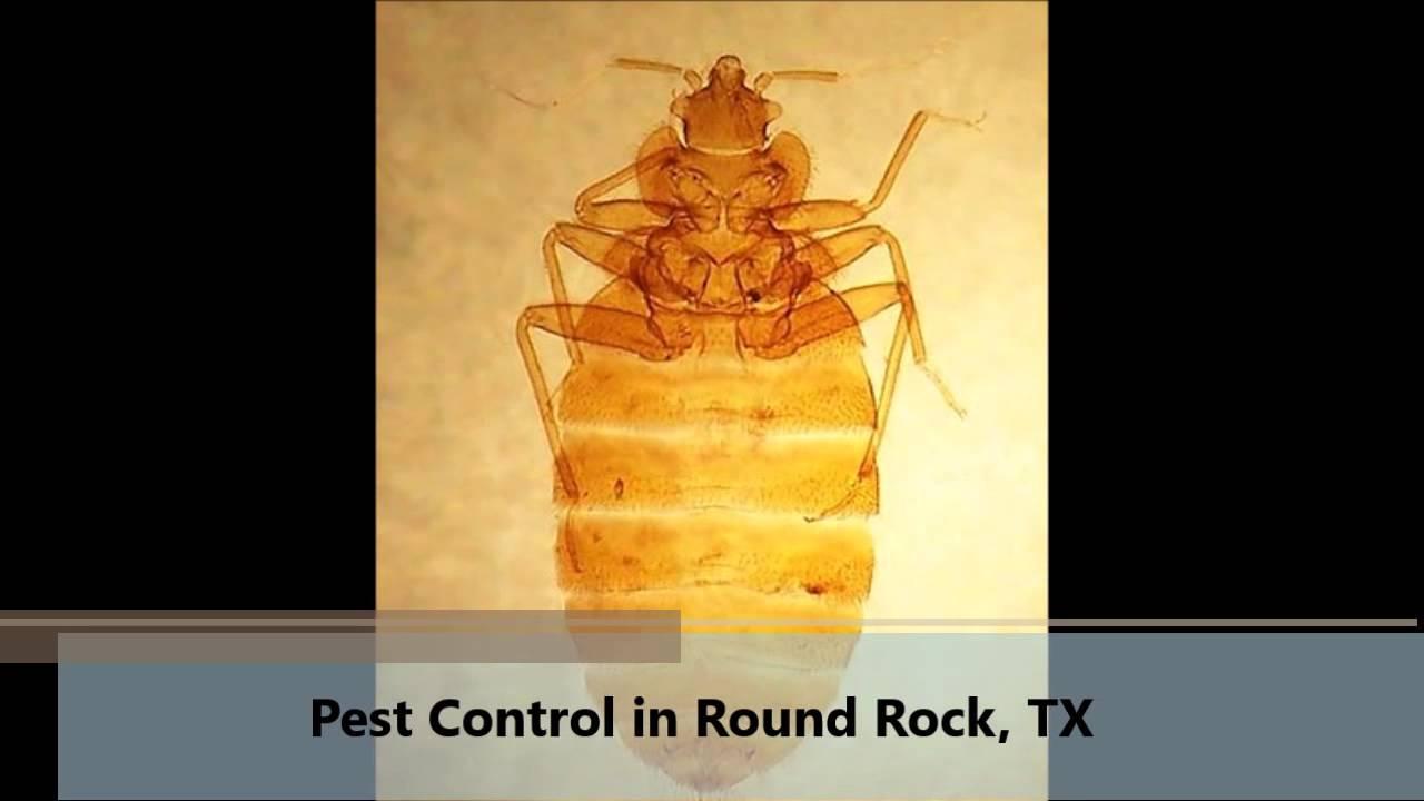Pest Control Round Rock Tx Dm