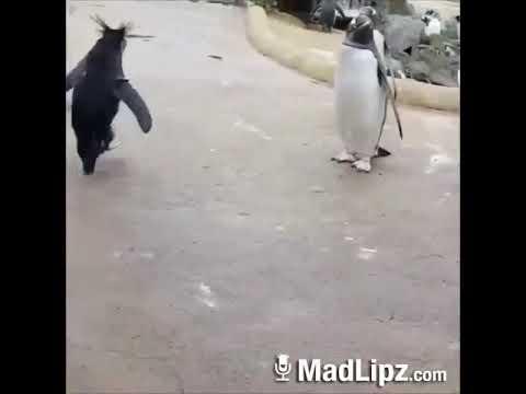 Quando il pinguino si ubriaca...