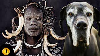 10 TERRORISING AFRICAN DOG BREEDS