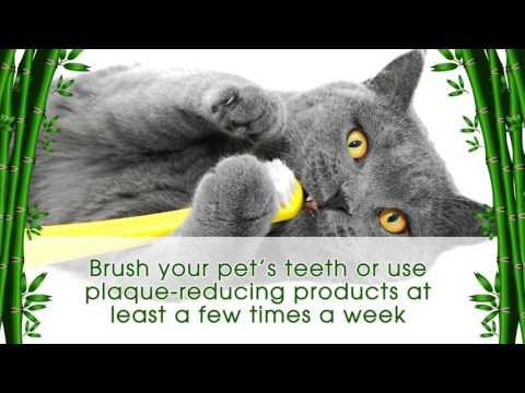 Pet Health What is Dental Disease?