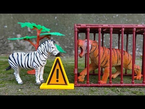 Câu chuyện về tình bạn giữa các con vật FMC H676T