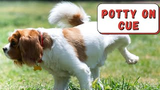 How to Train Dog or Puppy To Potty on Command