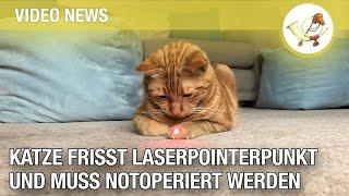Katze frisst Laserpointerpunkt und muss notoperiert werden