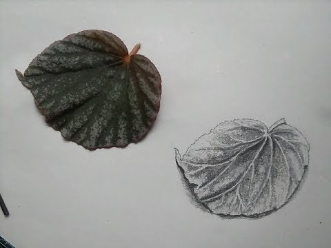 How to draw a leaf pencil drawing