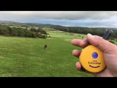 How to train or teach a dog to stop or sit at distance with an e collar