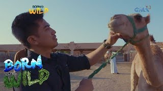 Born to Be Wild: Doc Ferds visits a camel market in Abu Dhabi