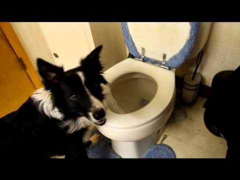 Jasper Using The Toilet