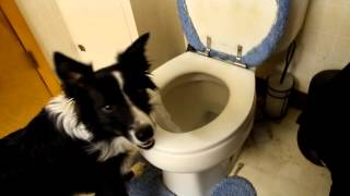 Jasper Using The Toilet
