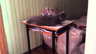 Британские Коты на дозоре