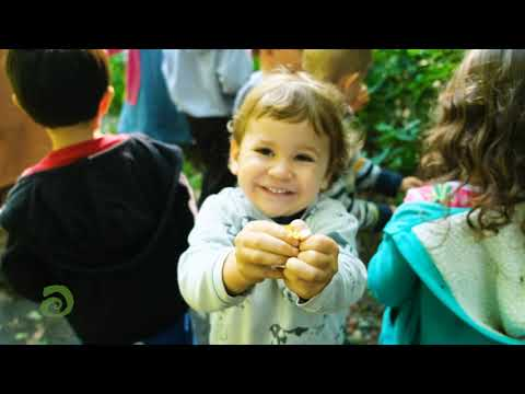 Susquehanna Waldorf School: Children In The Woods