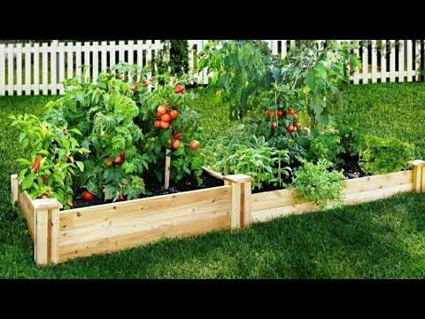 Mi huerto de vegetales en casa youtube - Pequeno huerto en casa ...