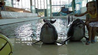 Дельфины и морские котики, выступление в фотографиях ➨ Dolphins and sea lions, the performance in