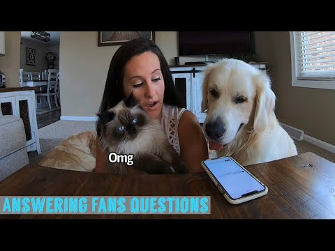 Answering Fans Questions