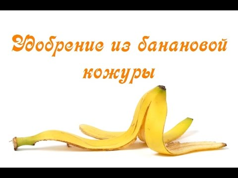 Бананы - польза и вред, лечебные свойства бананов и