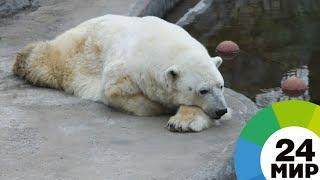 Японские ученые накормили рыбой медведей в Московском зоопарке - МИР 24