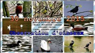 Martin pêcheur, mésange, merle, mouettes, canards, cygne, cormoran