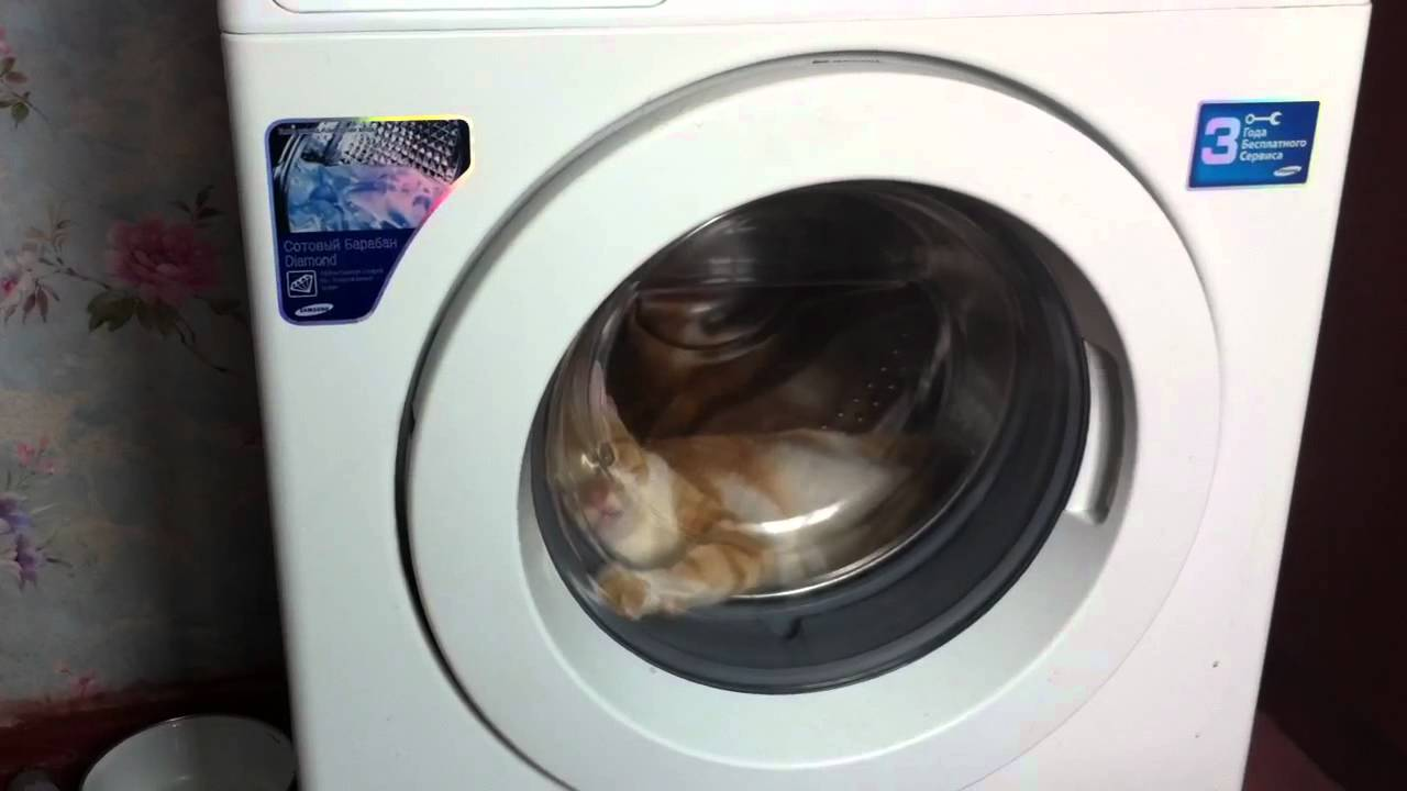 Cat In Dryer Odessa Ukraine Youtube