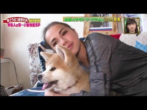 Alina Zagitova life with Akita Masaru 秋田犬 勝利 Масару