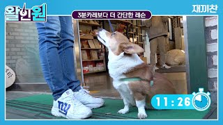 1-Min Dog Lesson By Animal Behaviorist 'Chan' [Mastering Dog Walk EP1]
