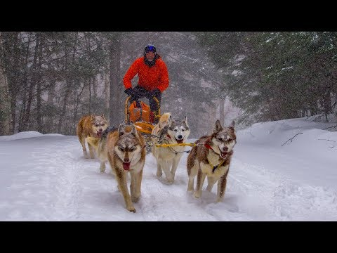 Dogsledding In A Snow Storm - A Winter Camping Adventure