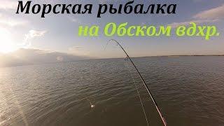 Морская рыбалка с лодки на Обском водохранилище на судака.