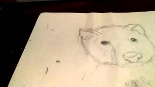 How to draw a wolf cub