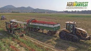 Tomato Harvest  - IL FILM - Team Rinaldo | Agriharvest